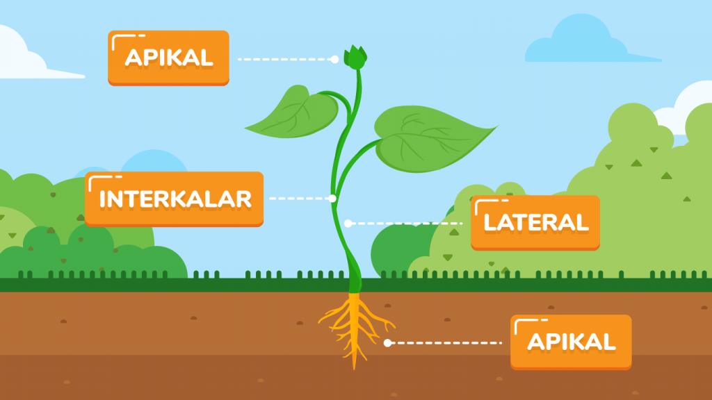 Biologi Jaringan Tumbuhan Pahamify Belajar Jadi Seru