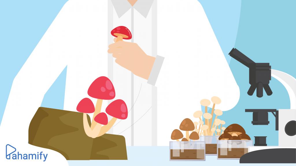 Klasifikasi kingdom fungi dan struktur tubuh jamur